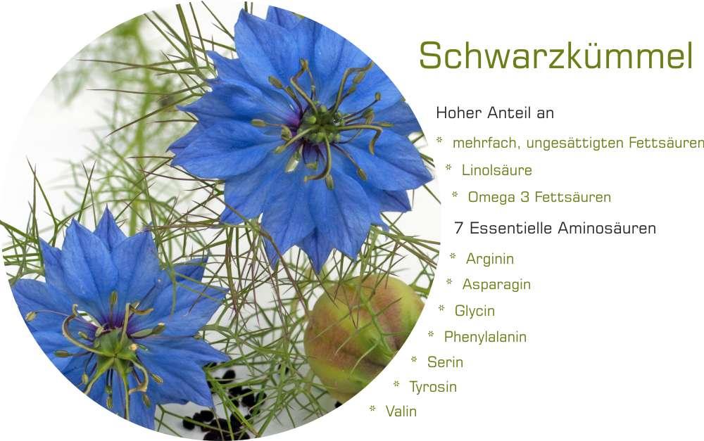 Schwarzk-mmelbl-te_1000x627